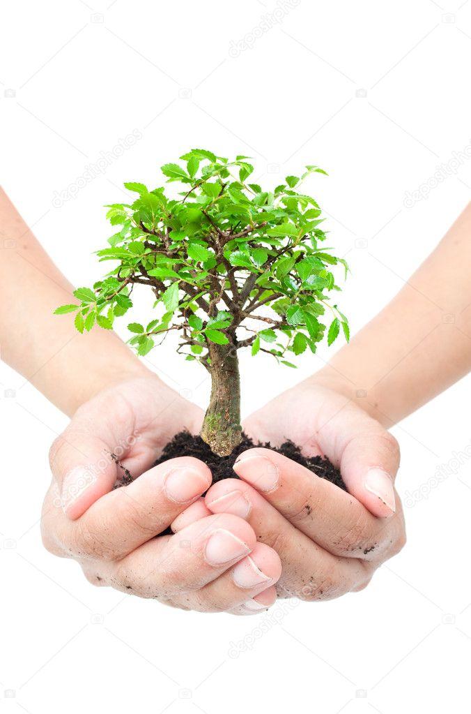 Акция «Посади дерево» - ОСЕНЬ  2019 !